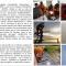 """Mantenimiento Preventivo y Correctivo al Faro Estratégico """"PUNTA BARIMA"""" y al Faro """"ESTACIÓN FERROMINERA"""" Ubicadas en el Estado Delta Amacuro"""
